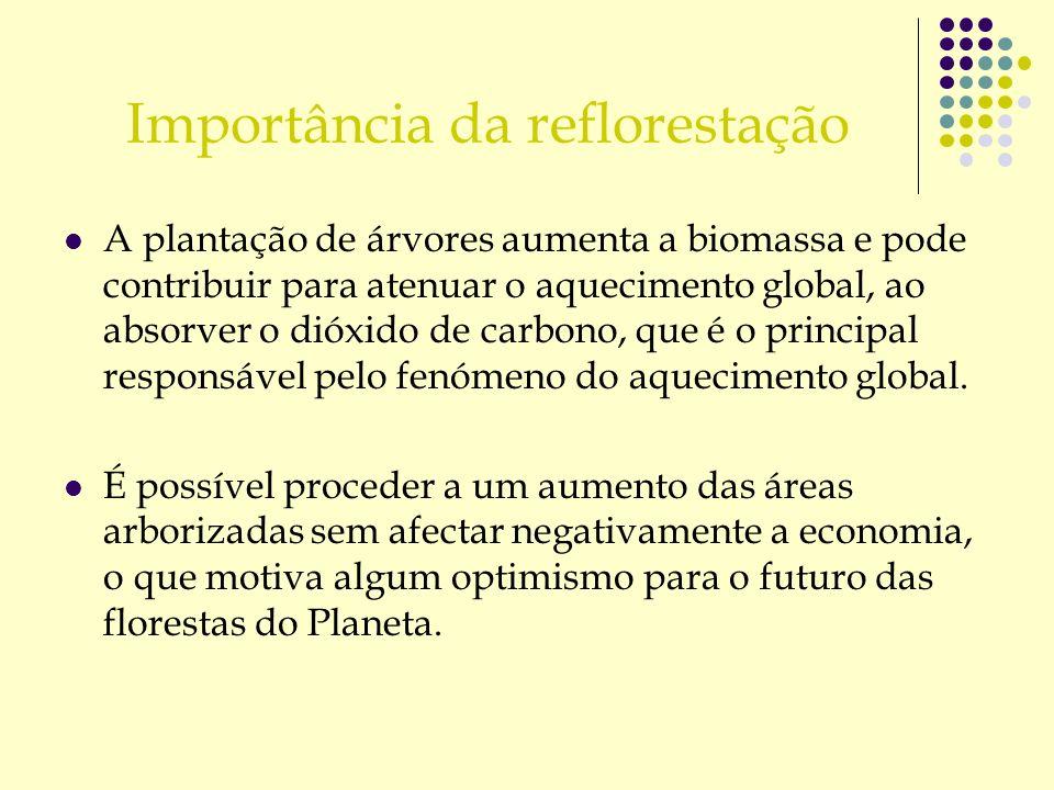 Importância da reflorestação A plantação de árvores aumenta a biomassa e pode contribuir para atenuar o aquecimento global, ao absorver o dióxido de c