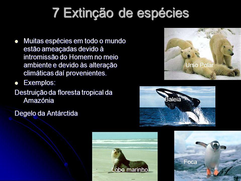 7 Extinção de espécies Muitas espécies em todo o mundo estão ameaçadas devido à intromissão do Homem no meio ambiente e devido às alteração climáticas daí provenientes.
