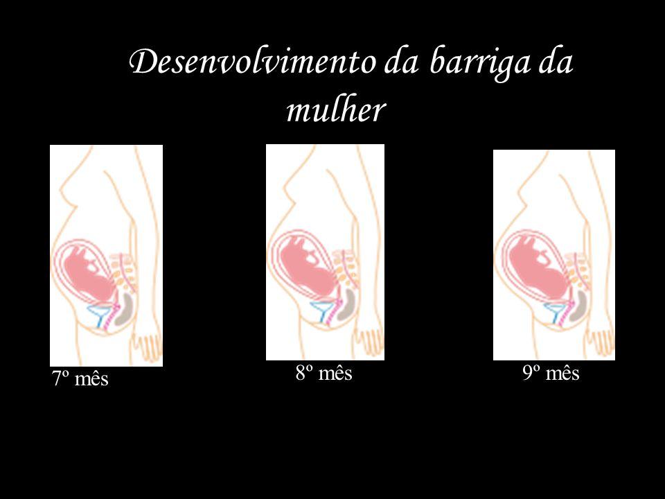 O Desenvolvimento da barriga da mulher 7º mês 8º mês9º mês