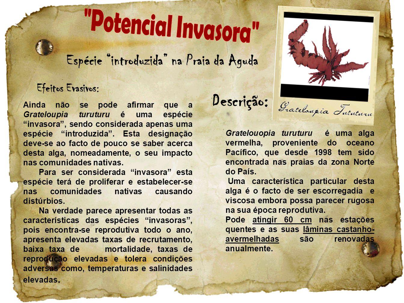 Espécie introduzida na Praia da Aguda Descrição: Gratelouopia turuturu é uma alga vermelha, proveniente do oceano Pacífico, que desde 1998 tem sido en