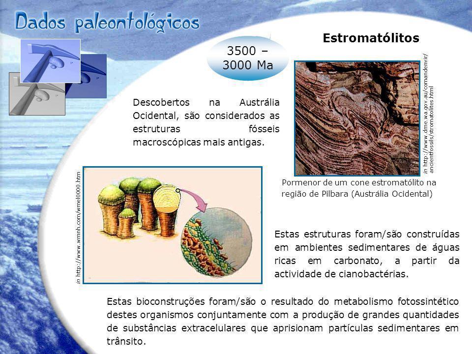 Formação composta por material silicioso no qual foram detectados vários tipos de bactérias (nomeadamente cianobactérias).