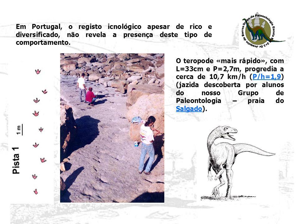 Em Portugal, o registo icnológico apesar de rico e diversificado, não revela a presença deste tipo de comportamento. O teropode «mais rápido», com L=3
