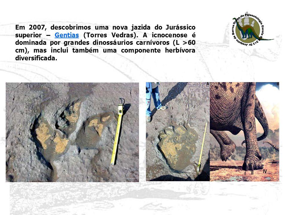 Em 2007, descobrimos uma nova jazida do Jurássico superior – Gentias (Torres Vedras). A icnocenose é dominada por grandes dinossáurios carnívoros (L >