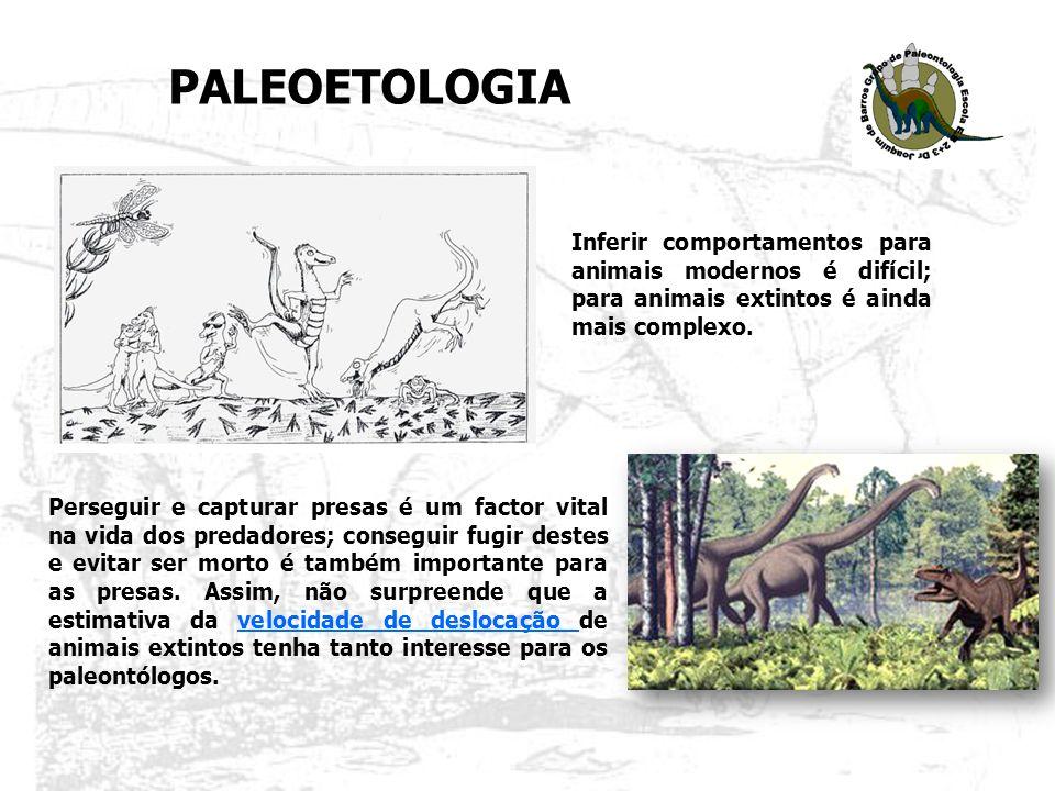 Sendo as pegadas/pistas fósseis o reflexo directo dos movimentos destes animais, o registo icnológico constitui a base para inferências de comportamentos deste tipo.