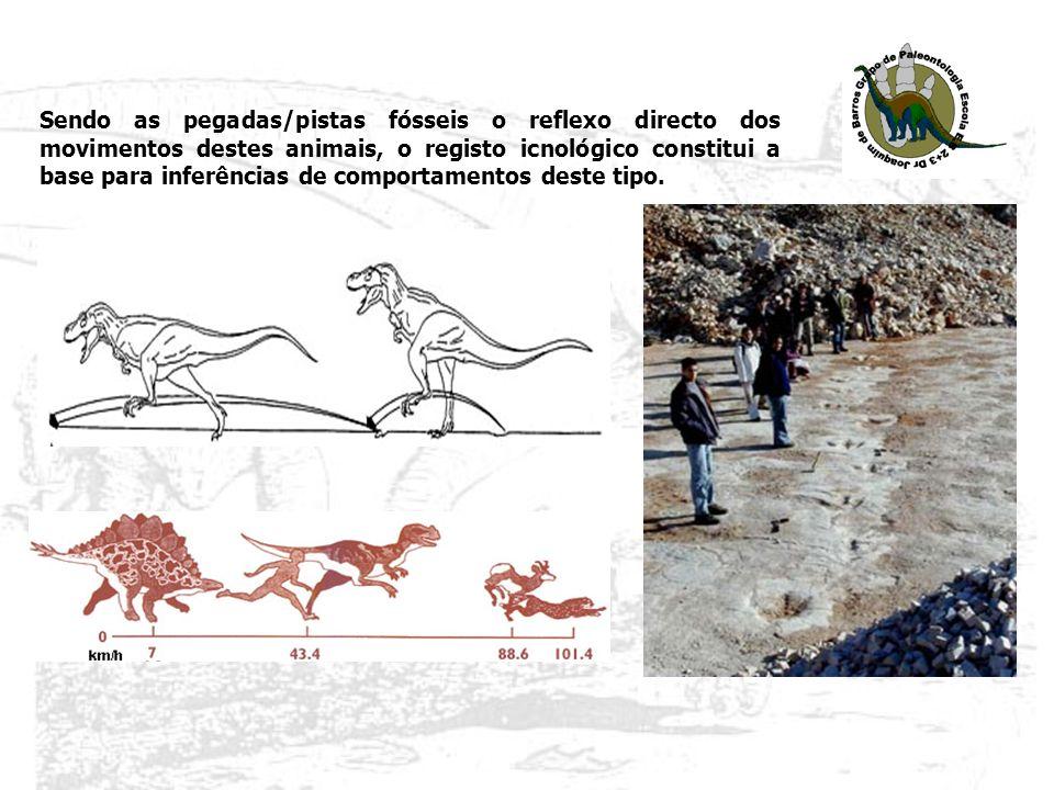 Sendo as pegadas/pistas fósseis o reflexo directo dos movimentos destes animais, o registo icnológico constitui a base para inferências de comportamen