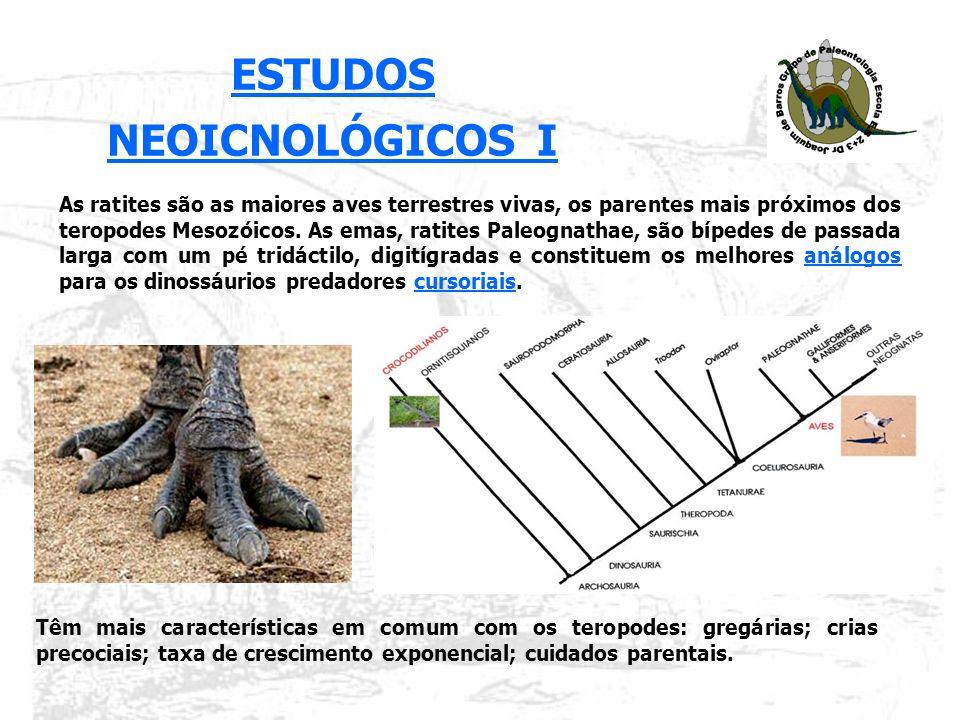 Para os teropodes de grandes dimensões (L 60cm; peso 3 toneladas; h 2,5m) só é conhecido uma pista no mundo – Ardley - em que o predador se deslocava a grande velocidade – no segmento mais rápido, atingiria os 14,7 km/h.teropodes de grandes dimensões Ardley