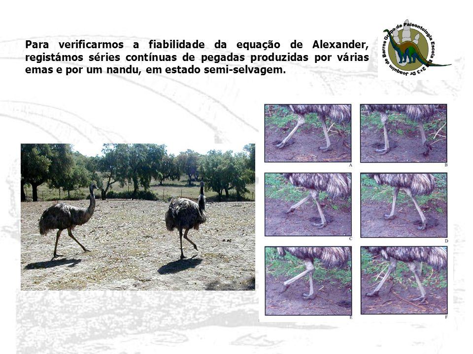 Em 2007, descobrimos uma nova jazida do Jurássico superior – Gentias (Torres Vedras).