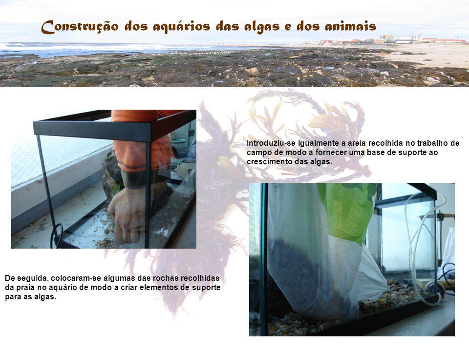 Construção dos aquários das algas e dos animais De seguida, colocaram-se algumas das rochas recolhidas da praia no aquário de modo a criar elementos d