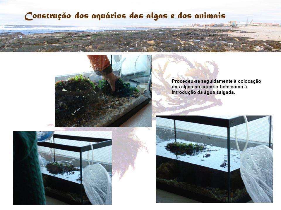 Construção dos aquários das algas e dos animais Procedeu-se seguidamente à colocação das algas no aquário bem como à introdução da água salgada.