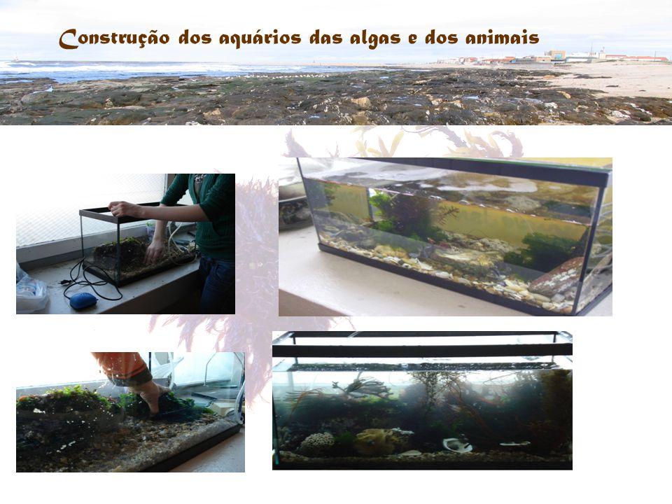 Construção dos aquários das algas e dos animais