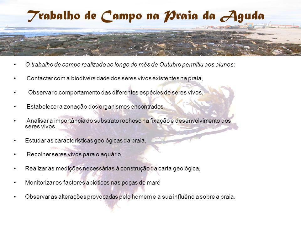 Trabalho de Campo na Praia da Aguda O trabalho de campo realizado ao longo do mês de Outubro permitiu aos alunos: Contactar com a biodiversidade dos s