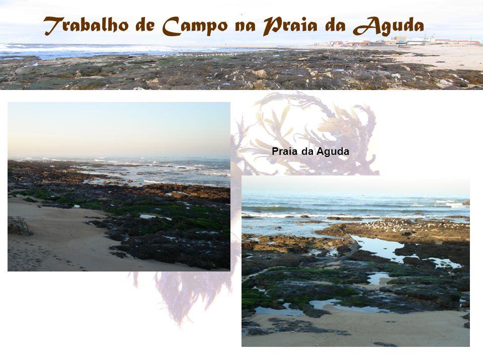 Trabalho de Campo na Praia da Aguda. Praia da Aguda