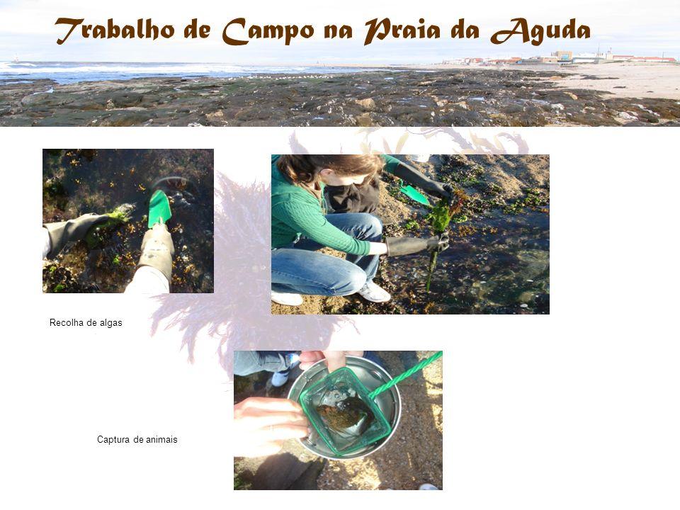 Recolha de algas Captura de animais Trabalho de Campo na Praia da Aguda