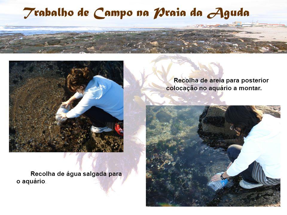 Recolha de água salgada para o aquário. Recolha de areia para posterior colocação no aquário a montar.