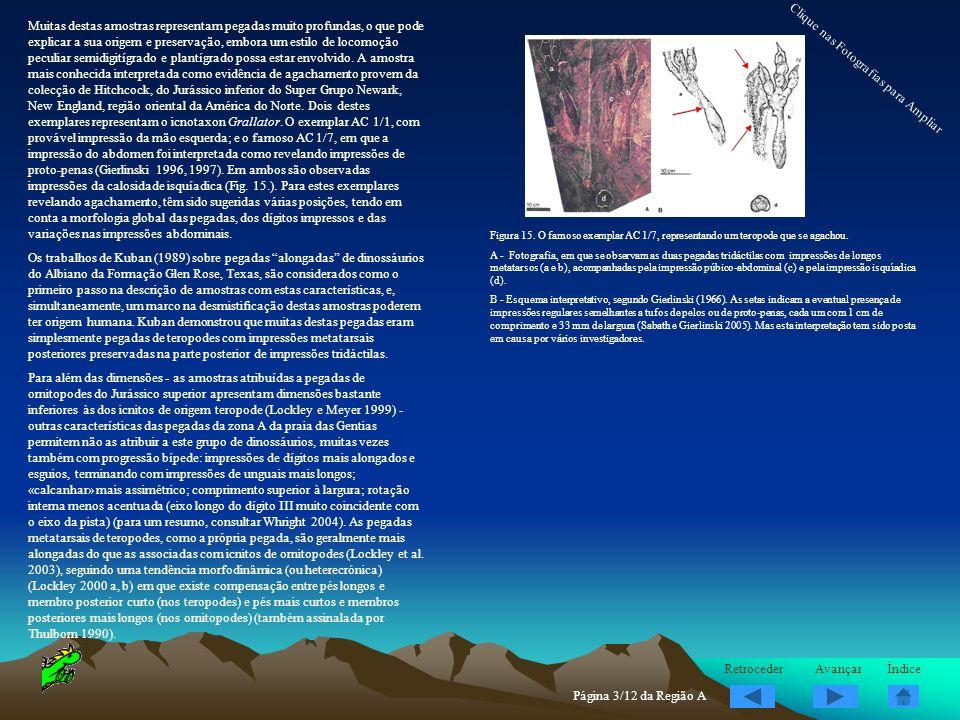Muitas destas amostras representam pegadas muito profundas, o que pode explicar a sua origem e preservação, embora um estilo de locomoção peculiar sem