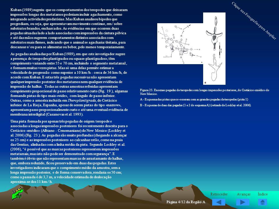 Kuban (1989) sugeriu que os comportamentos dos teropodes que deixaram impressões longas dos metatarsos poderiam incluir agachamento, como integrando a
