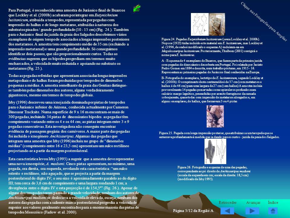 Para Portugal, é reconhecida uma amostra do Jurássico final de Buarcos que Lockley et al. (2000b) acabaram por integrar em Eutynichnium lusitanicum, a