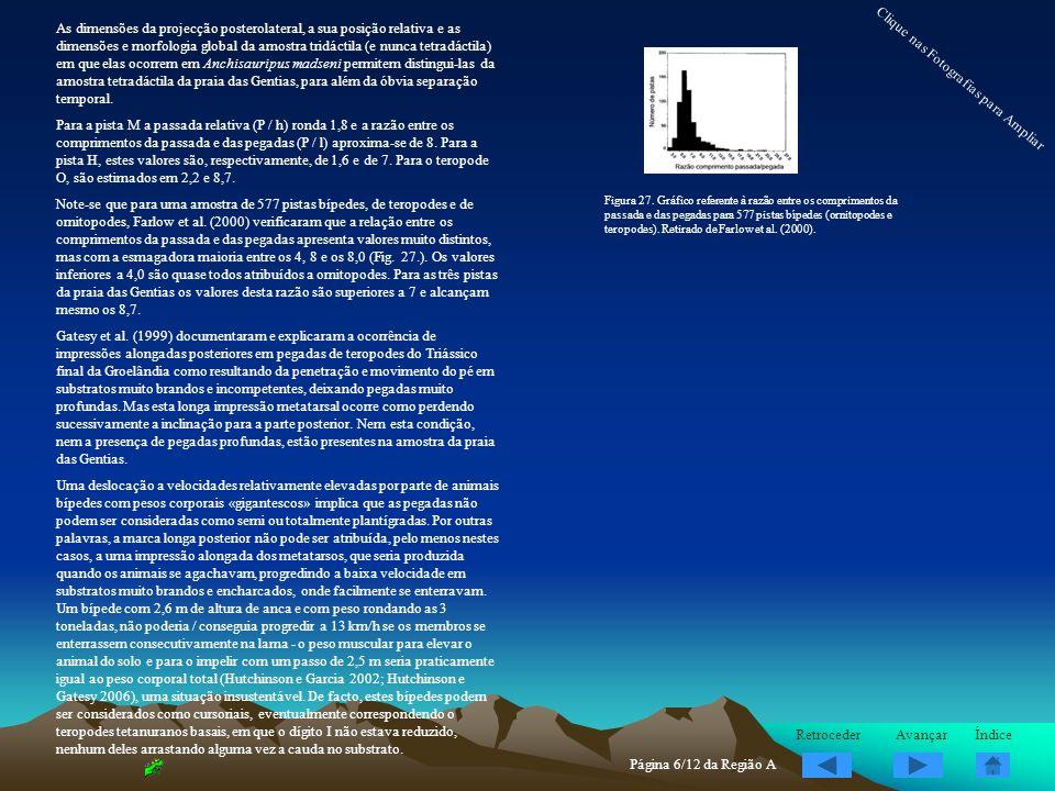 As dimensões da projecção posterolateral, a sua posição relativa e as dimensões e morfologia global da amostra tridáctila (e nunca tetradáctila) em qu
