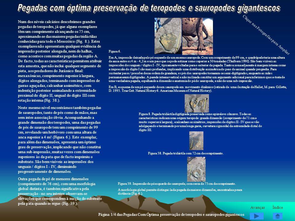 Num dos níveis calcários descobrimos grandes pegadas de teropodes, já que alguns exemplares têm um comprimento alcançando os 75 cm, aproximando-se das