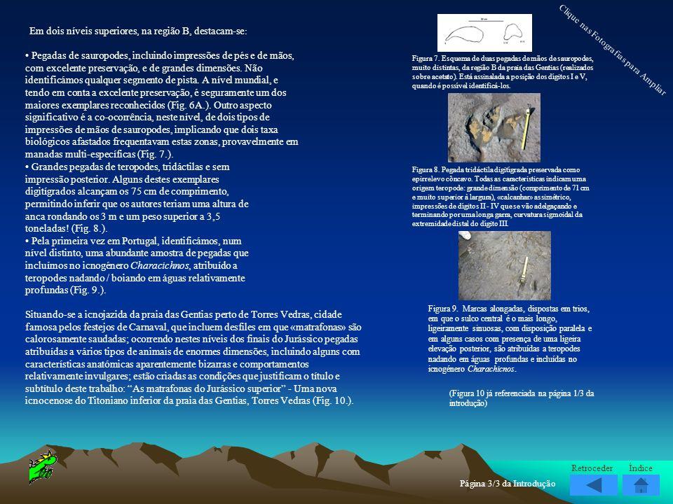 Em dois níveis superiores, na região B, destacam-se : Pegadas de sauropodes, incluindo impressões de pés e de mãos, com excelente preservação, e de gr