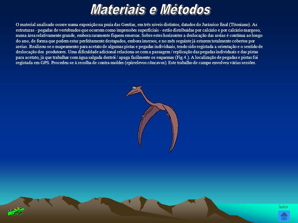 O material analisado ocorre numa exposição na praia das Gentias, em três níveis distintos, datados do Jurássico final (Titoniano). As estruturas - peg