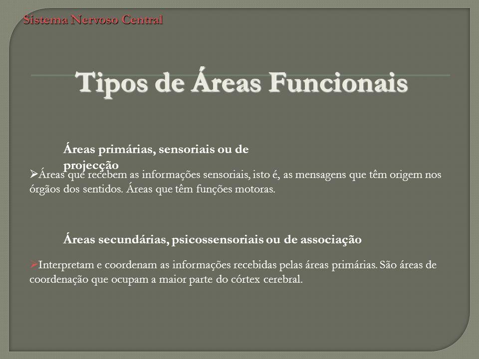 Sistema Nervoso Central Tipos de Áreas Funcionais Áreas primárias, sensoriais ou de projecção Áreas que recebem as informações sensoriais, isto é, as