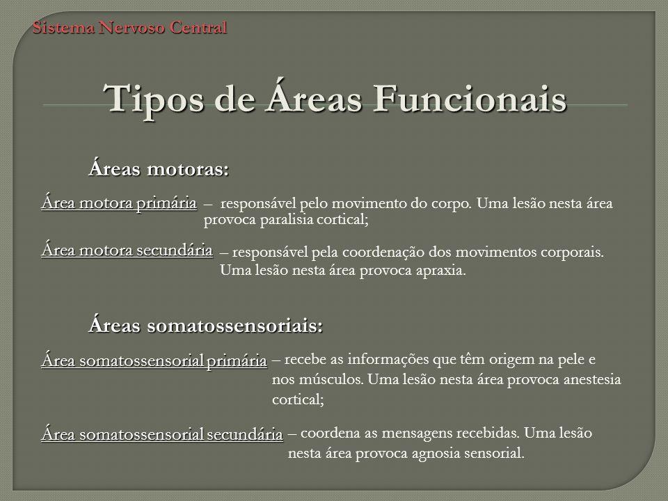 Sistema Nervoso Central Tipos de Áreas Funcionais Áreas motoras: – responsável pelo movimento do corpo. Uma lesão nesta área provoca paralisia cortica