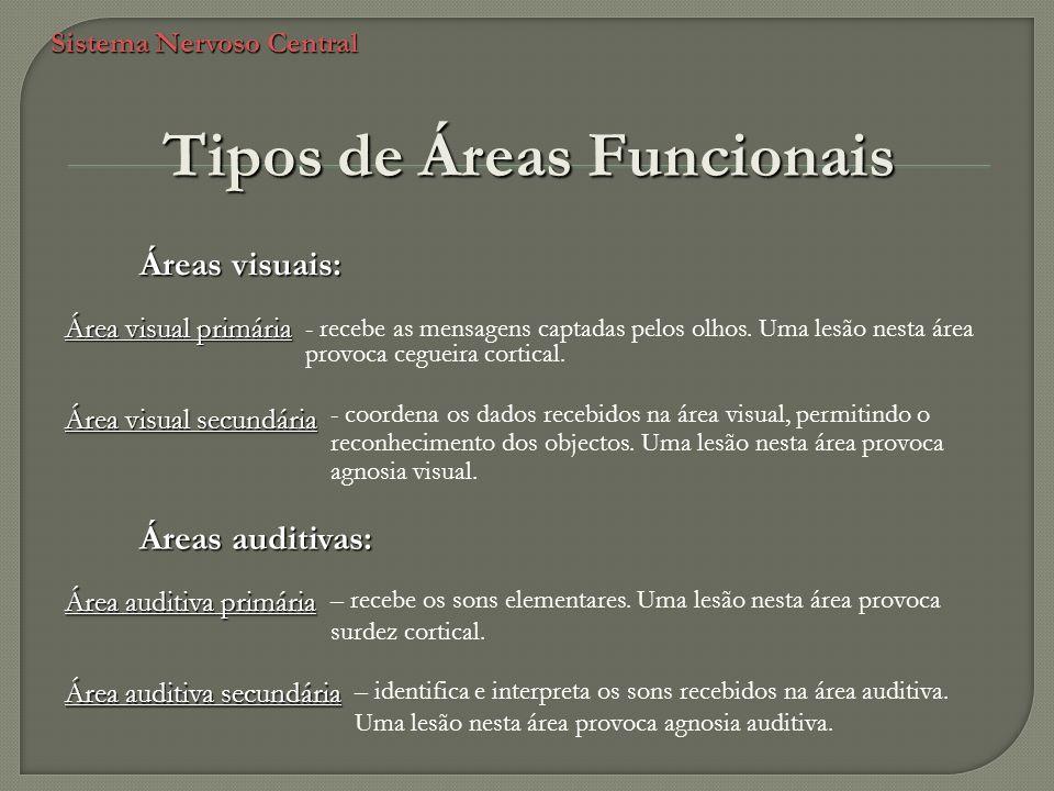 Sistema Nervoso Central Áreas visuais: - recebe as mensagens captadas pelos olhos. Uma lesão nesta área provoca cegueira cortical. - coordena os dados