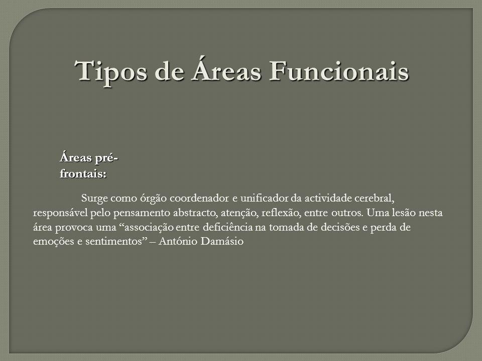 Áreas pré- frontais: Surge como órgão coordenador e unificador da actividade cerebral, responsável pelo pensamento abstracto, atenção, reflexão, entre
