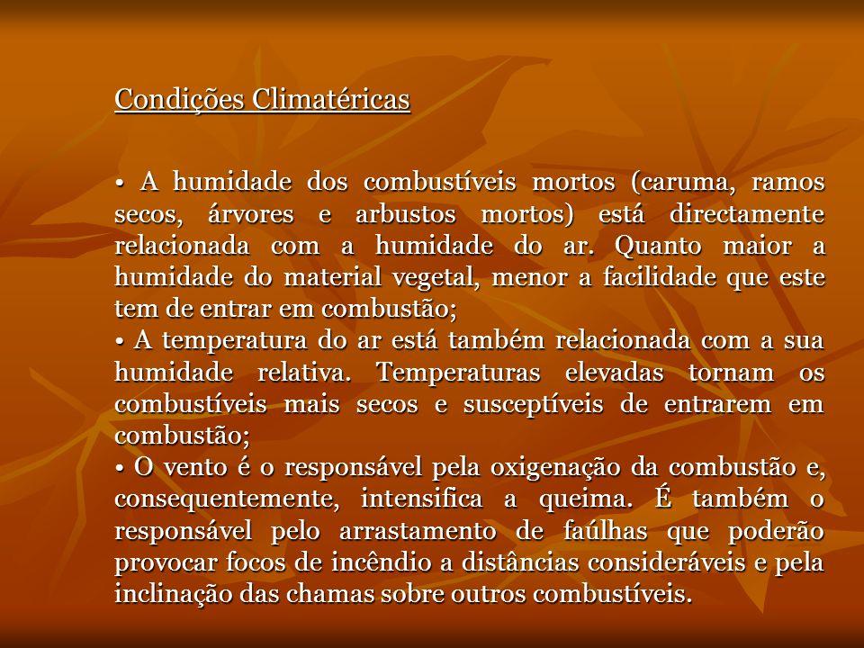 Tipo de Coberto Vegetal A floresta portuguesa é constituída por pinheiro bravo e outras espécies, originárias ou não do nosso território: sobreiros e azinheiras, eucalipto e carvalhos.