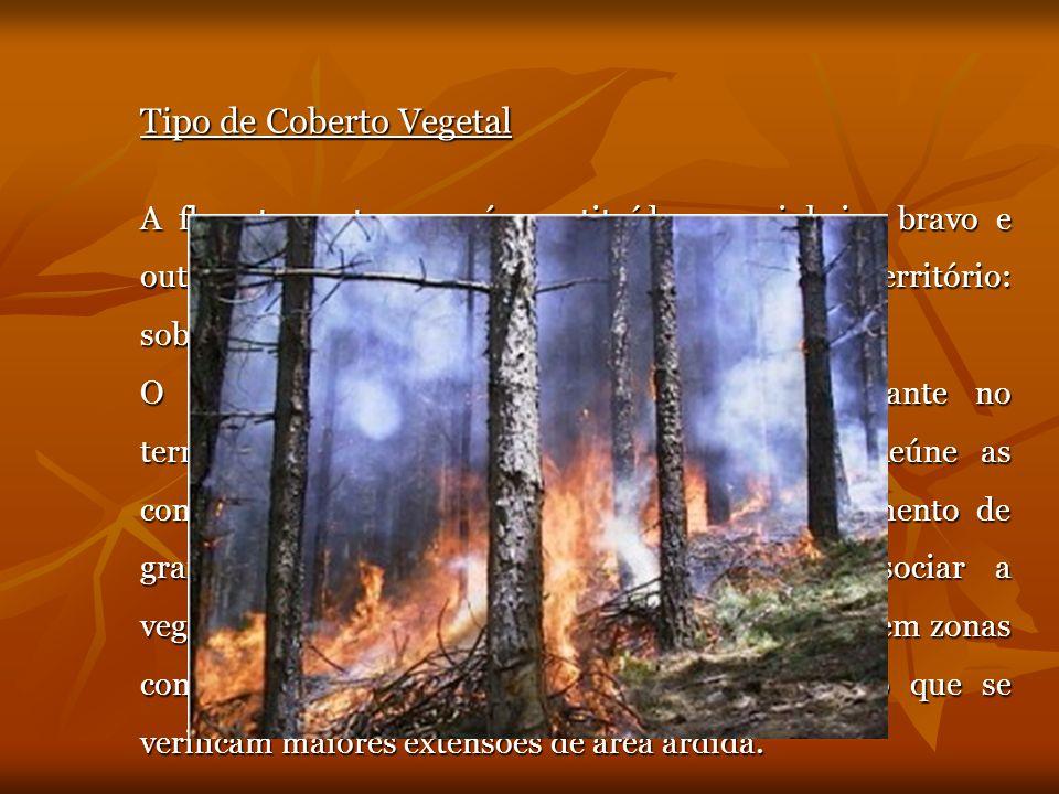Tipo de Coberto Vegetal A floresta portuguesa é constituída por pinheiro bravo e outras espécies, originárias ou não do nosso território: sobreiros e