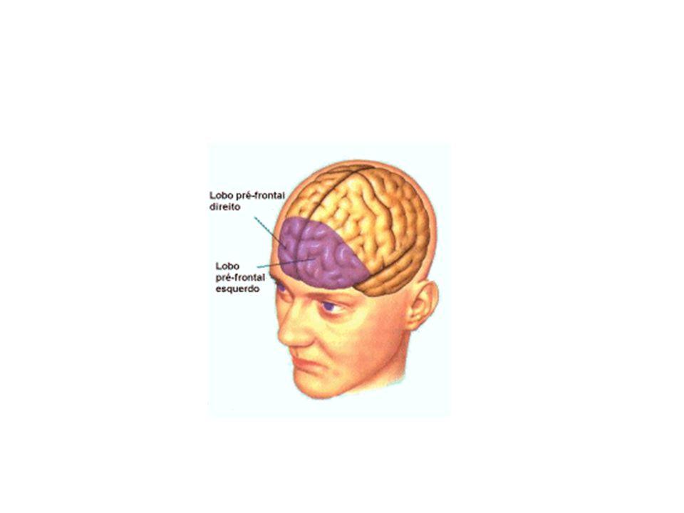 PESQUISA Barkley (1981) agrupa os problemas em cinco categorias: comportamentais, cognitivos, escolares, sociais, emocionais e físicos.