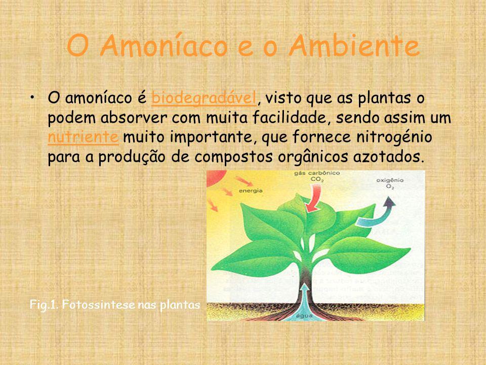 O Amoníaco e o Ambiente O amoníaco é biodegradável, visto que as plantas o podem absorver com muita facilidade, sendo assim um nutriente muito importante, que fornece nitrogénio para a produção de compostos orgânicos azotados.