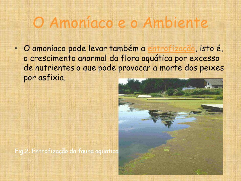 O Amoníaco e o Ambiente O amoníaco pode levar também a entrofização, isto é, o crescimento anormal da flora aquática por excesso de nutrientes o que pode provocar a morte dos peixes por asfixia.