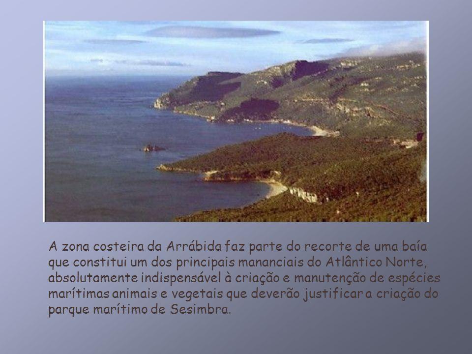 A zona costeira da Arrábida faz parte do recorte de uma baía que constitui um dos principais mananciais do Atlântico Norte, absolutamente indispensáve