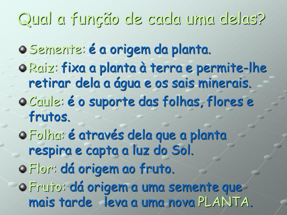 Constituição da Planta flor fruto folha caule raiz semente