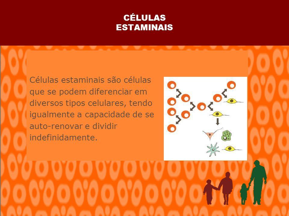 CÉLULAS ESTAMINAIS Células estaminais são células que se podem diferenciar em diversos tipos celulares, tendo igualmente a capacidade de se auto-renovar e dividir indefinidamente.