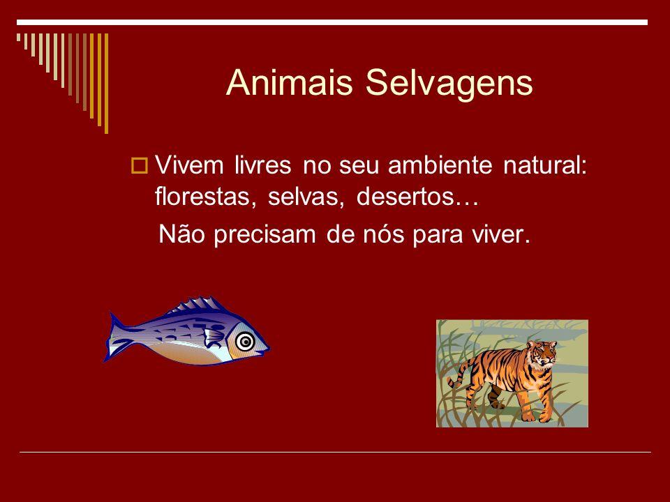 Animais Selvagens Vivem livres no seu ambiente natural: florestas, selvas, desertos… Não precisam de nós para viver.
