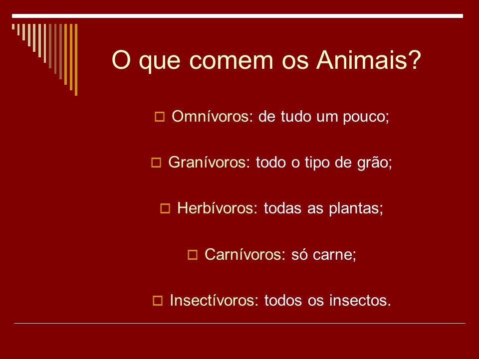 O que comem os Animais.