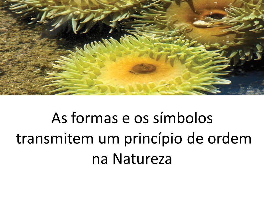 As formas e os símbolos transmitem um princípio de ordem na Natureza