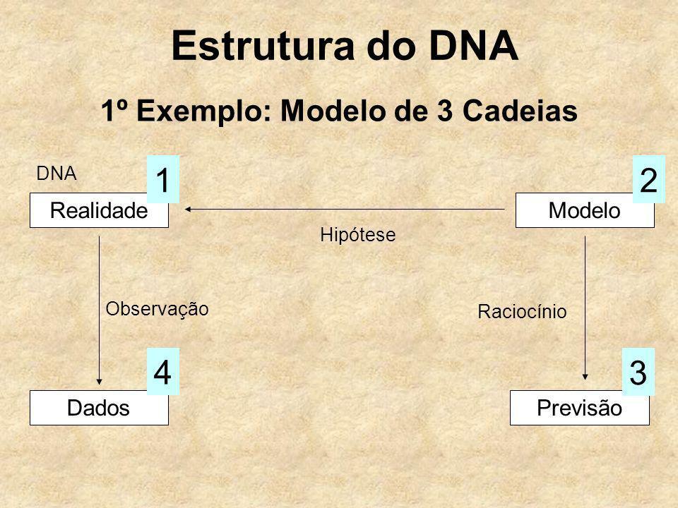 Estrutura do DNA 1º Exemplo: Modelo de 3 Cadeias RealidadeModelo Hipótese Dados Observação 4 Previsão 3 Raciocínio 12 DNA