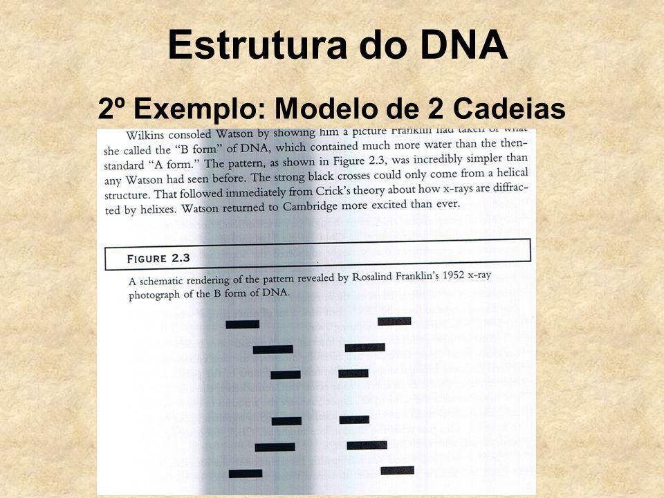 Estrutura do DNA 2º Exemplo: Modelo de 2 Cadeias