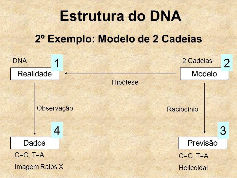 Estrutura do DNA 2º Exemplo: Modelo de 2 Cadeias RealidadeModelo Hipótese Dados Observação 4 Previsão 3 Raciocínio 12 DNA2 Cadeias C=G, T=A Imagem Raios X C=G, T=A Helicoidal
