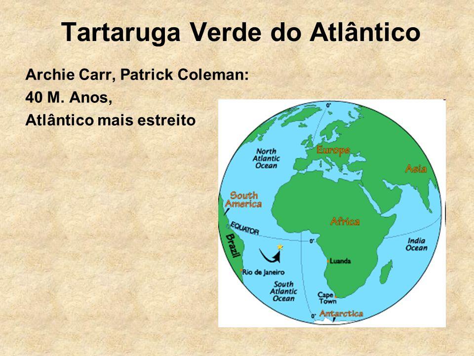 Tartaruga Verde do Atlântico Archie Carr, Patrick Coleman: 40 M. Anos, Atlântico mais estreito
