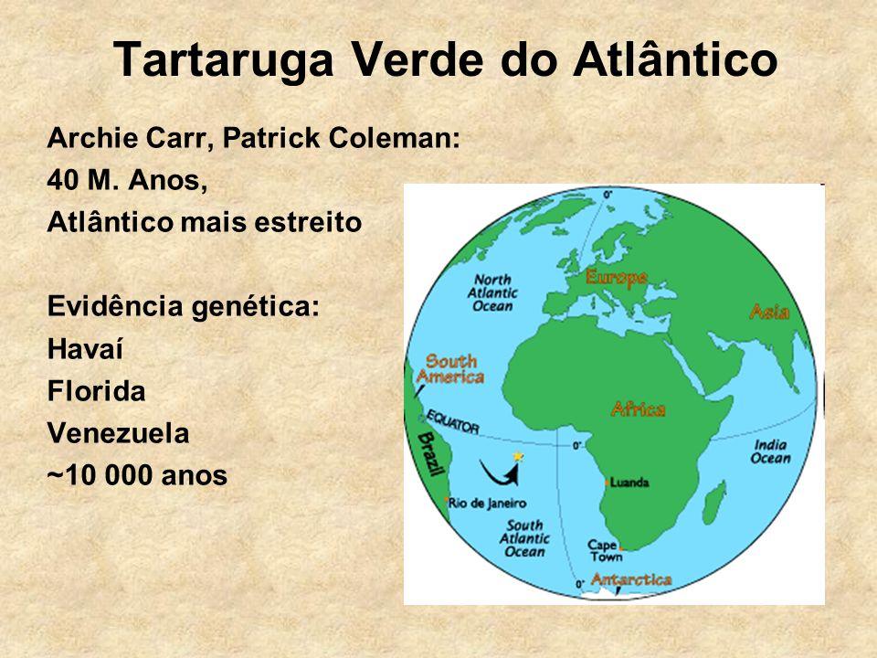 Tartaruga Verde do Atlântico Archie Carr, Patrick Coleman: 40 M. Anos, Atlântico mais estreito Evidência genética: Havaí Florida Venezuela ~10 000 ano