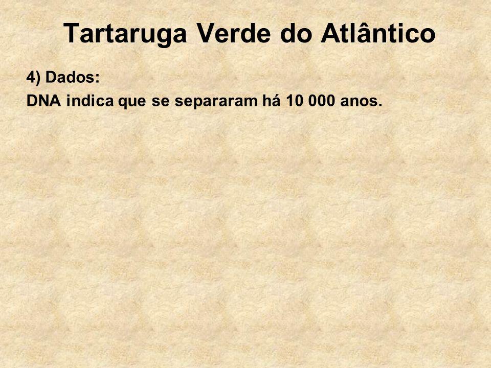 Tartaruga Verde do Atlântico 4) Dados: DNA indica que se separaram há 10 000 anos.