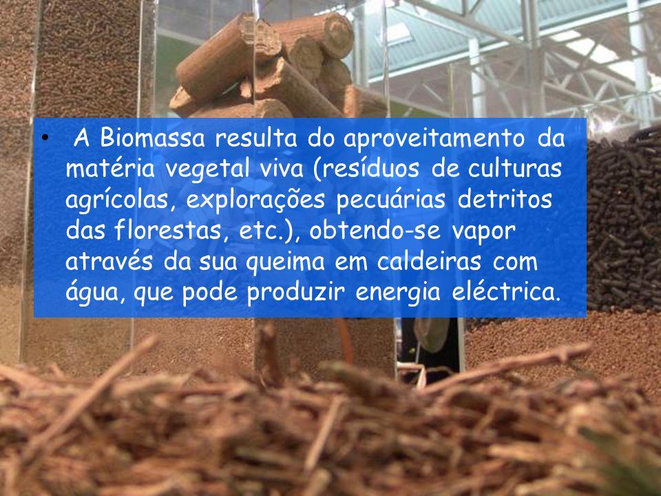 Do ponto de vista da geração de energia, o termo Biomassa abrange os derivados de organismos utilizados como combustíveis ou para a sua produção.