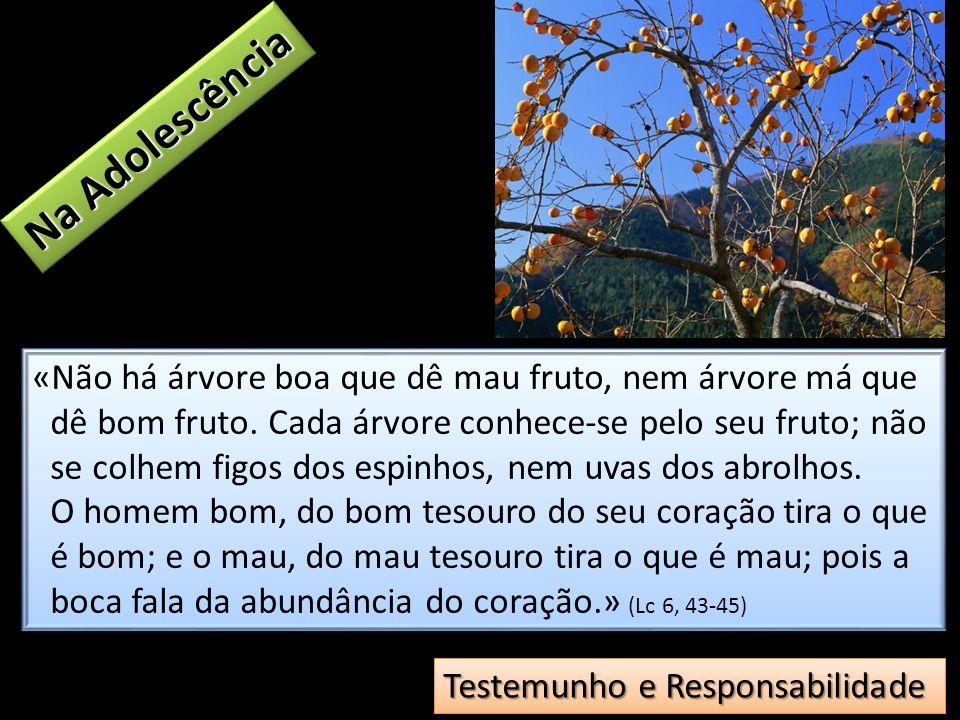 «Não há árvore boa que dê mau fruto, nem árvore má que dê bom fruto. Cada árvore conhece-se pelo seu fruto; não se colhem figos dos espinhos, nem uvas