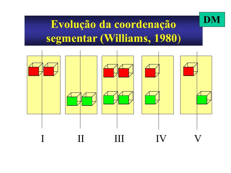 IIIIVIIIV Evolução da coordenação segmentar (Williams, 1980) DM