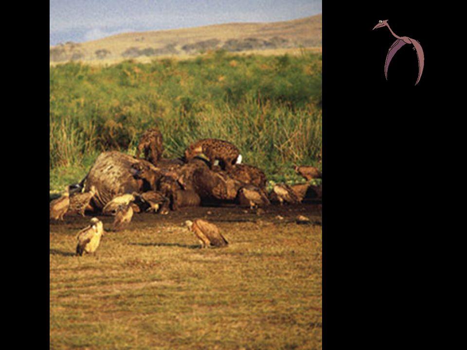 Uma espécie (predador) captura e mata outro (presa) para dele se poder alimentar Ex: Aranha e Gafanhoto; Planta carnívora e insecto.